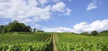 Vin Pessac Leognan: un véritable goût du terroir.